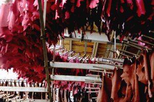 Ecoinnovación para ayudar al sector del cuero del norte de África