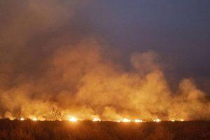 Los incendios en la Amazonia amenazan también a la industria del cuero de Brasil